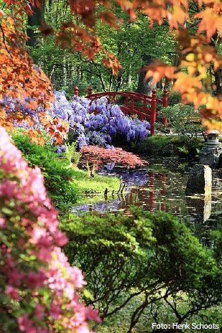Japanse garden.
