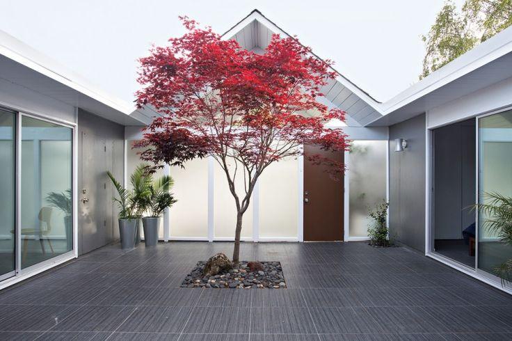 modernes-haus-innenhof-minimalistisch-grau-roter- Japanischer Ahorn