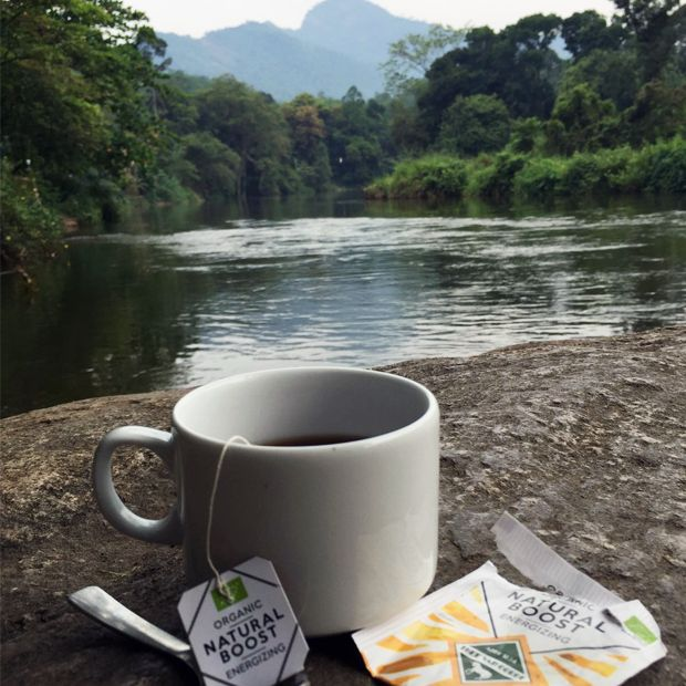 Whenever you need a boost, Thee Van Oordt Natural Boost is there for you #tea #organictea #teaspiration #srilanka #herbaltea