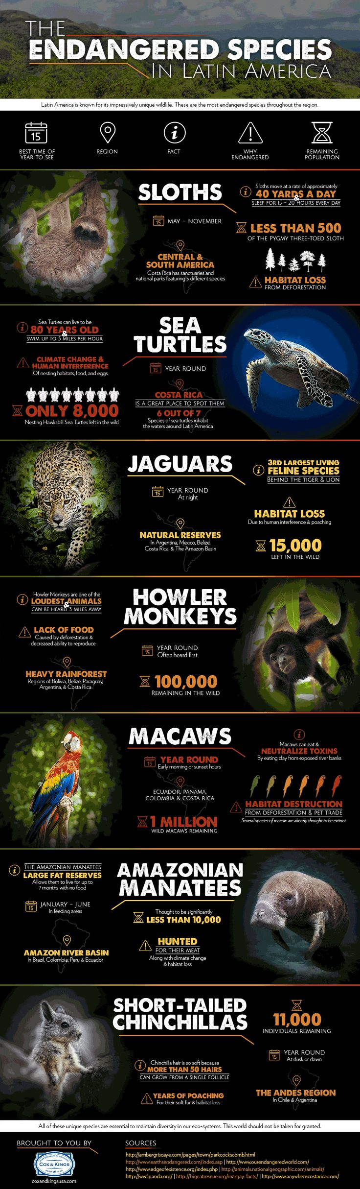 Latin America is known for its impressively unique wildlife. We have compiled a list of endangered species from the region that are vital to the eco-system in order to raise awareness.
