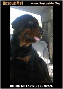 Rottweiler rescue greenville sc