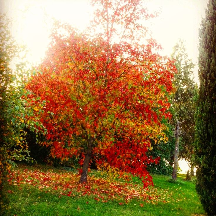 first pic which i did in this fall 2015. I love fall is my favorite season <3