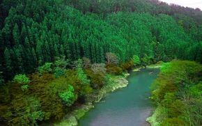 Fiume Oi, foresta, Arashiyama, Kyotom, giappone