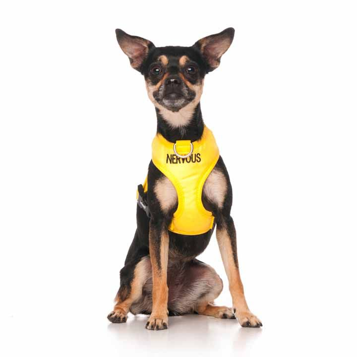 "Yellow NERVOUS vest harness   Fits Max Neck 26cm (10"")  Chest 33-48cm (13-19"")   Model: Chihuahua"