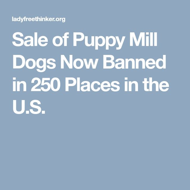 Sale of Puppy Mill Dogs Now Banned in 250 Places in the U.S.