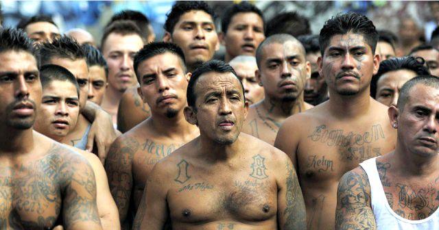 One-Third of 214 Arrested MS-13 Gangsters Were Unaccompanied Alien Children