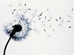 tatouage fleur de pissenlit                              …