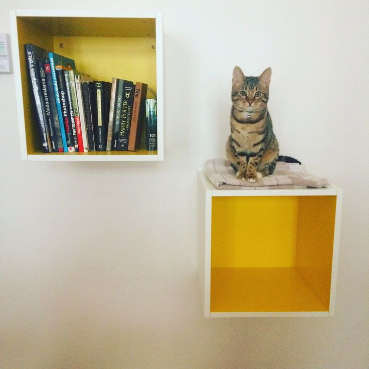 Cubes! Yellow kitty cubes, library and kitty place. #Cube #cubespace #kitty #catplace #library #yellow #homedecor #homedesign #ikealowcost #yellowstyle
