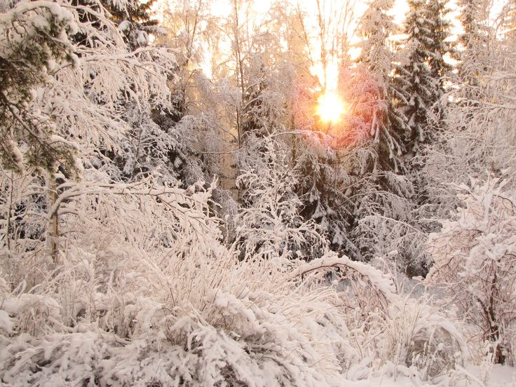 Puutarhan talvea