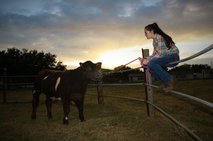 Show steer