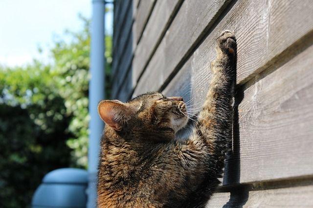 Katzen müssen an Möbeln und Wänden kratzen? Ja!