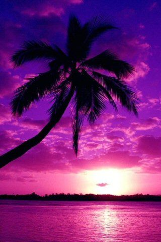 everything purple   ... purple? Show some images of purple things and make my day a purple one