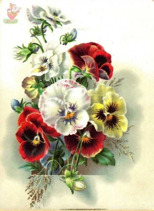 28 Best Images About Flowers Pansies On Pinterest