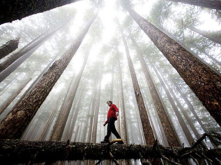 Olympic National Park, Washington.