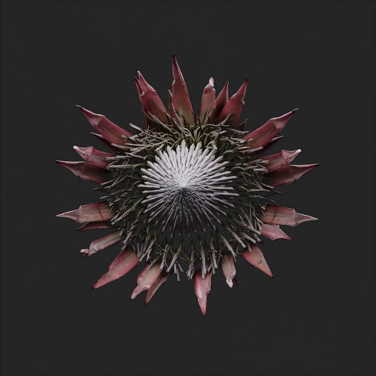 Carsten Witte plants