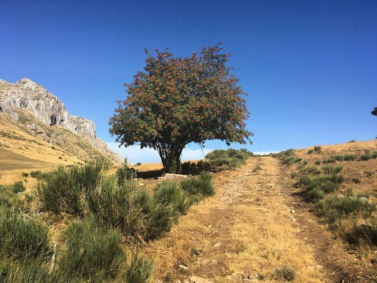 Árbol solitario #Villamanin #León