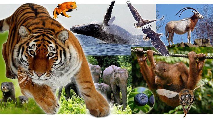 Lajeja kuollut sukupuuttoon hälyttävää tahtia