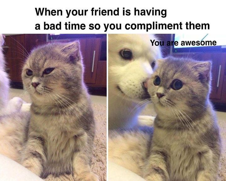 Funny Cat Memes That Will Make You Cry Laughing 21 Funny Dog Pictures Funny Animals Cute Animals