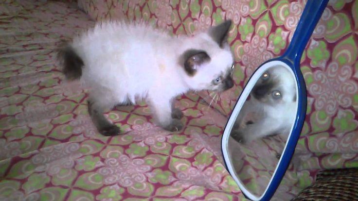 Dizzy Fox Bean as kitty and the mirror !!!  https://twitter.com/DizzyFoxBean