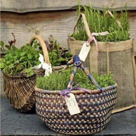 выращивайте в сумках и корзанах