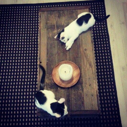 kittens ♥