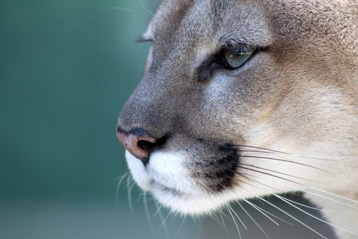 Alligator Alley: Take a hike in Florida panther country