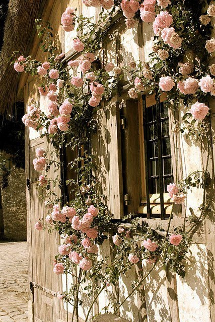French window and roses