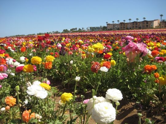 mothers day fun activities to enjoy in san diego ca