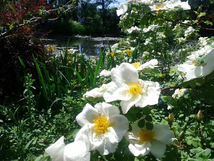 Jardins de Monet em Giverny.