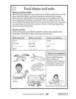 3rd grade, 4th grade Science Worksheets: Food chains and ...