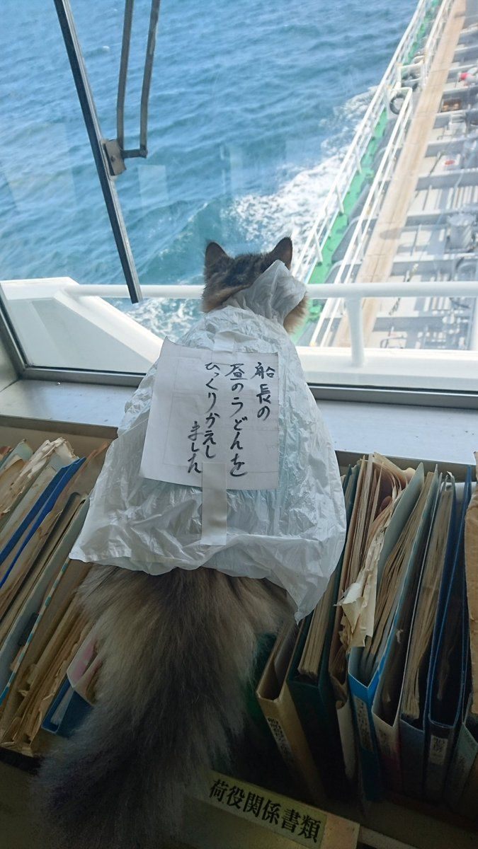 "the message on the back of the cat says ""I'm the one that flipped the captain's noodle lunch over..."""