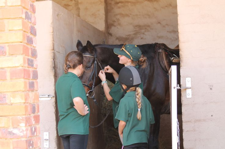 Liberty Instructor showing two children how to interact with a horse in a stable - Photo by Michael van Dyk
