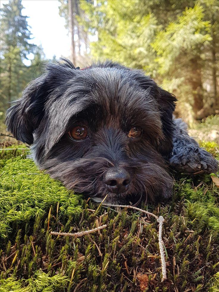 Hunde Foto: Melanie und Chipsy - Pause Hier Dein Bild hochladen: http://ichliebehunde.com/hund-des-tages  #hund #hunde #hundebild #hundebilder #dog #dogs #dogfun  #dogpic #dogpictures