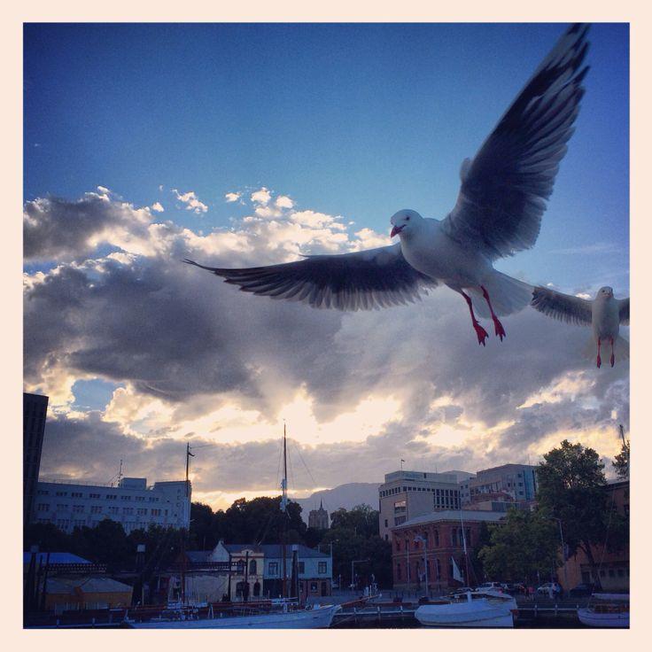 A photo a day keeps the boredom away Seagulls are crazy! #seaside #birdsbeactingcraycray