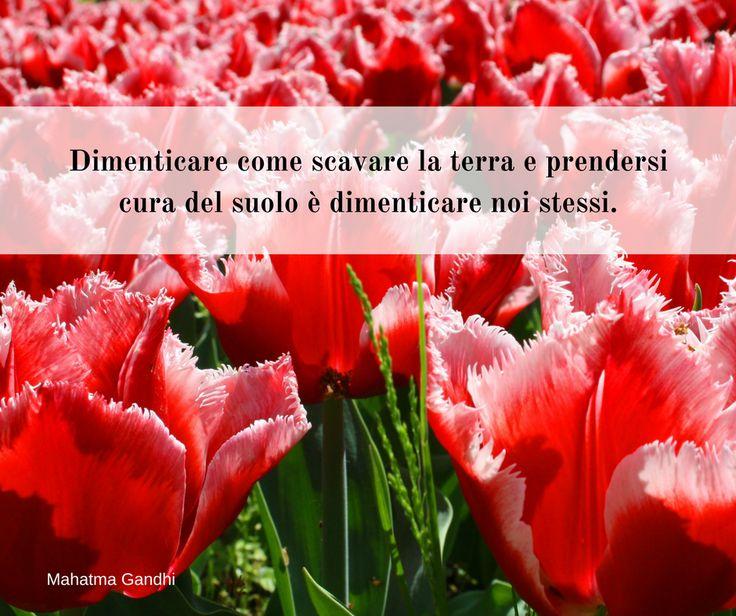Quote by Mahatma Gandhi #quotes #quote #aforismi #nature #natura #flowers #citazioni #naturequotes #Mahatma #Gandhi #MahatmaGandhi