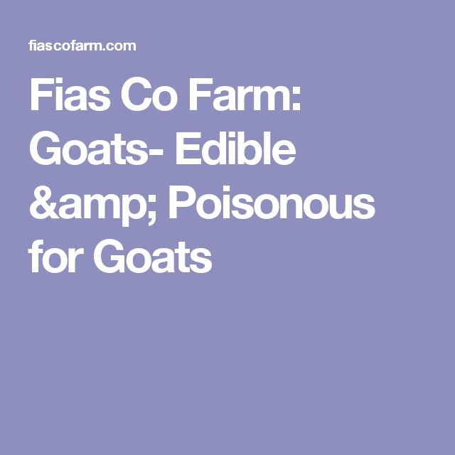 104 best images about goats on pinterest hay feeder
