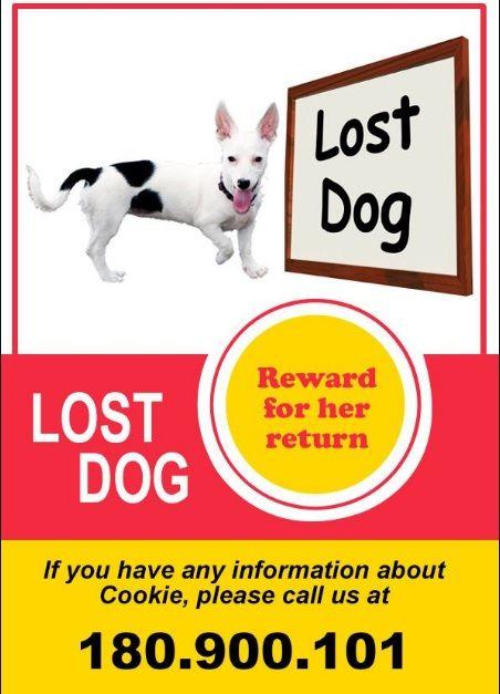 13+ Missing Pet Poster Templates Printable Word  PDF