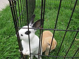 Teach Your Rabbit to Come when Called - now if I could get mine to sit still to start the process.