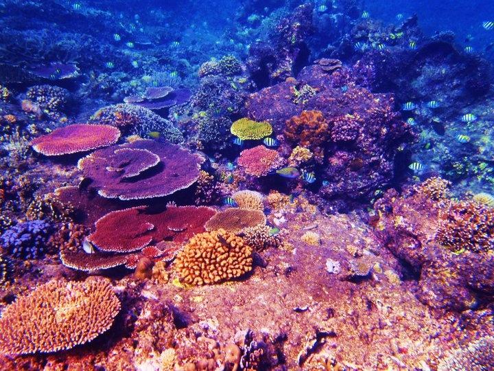 Snorkeling in the tropical waters off Gili Trawangan Island, Bali