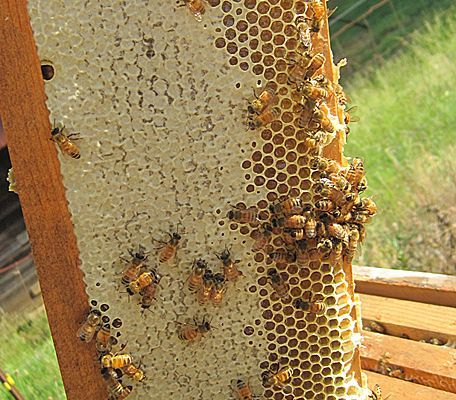 180 best save our pollinators images on pinterest backyard how to start beekeeping for honey fandeluxe Ebook collections