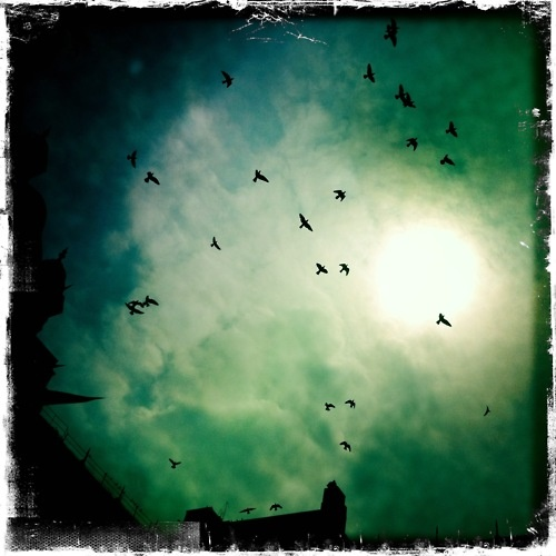 Pigeons above the Taj Palace pool - Photographed by Collette Dinnigan