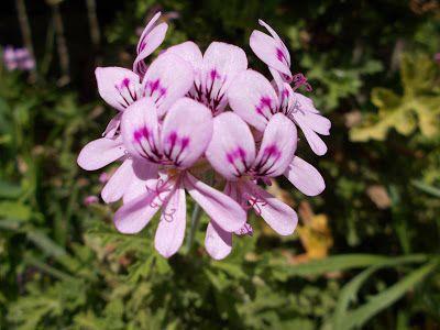 ΜΕΛΕΤΩ: Φυτα: Αρμπαρόριζα