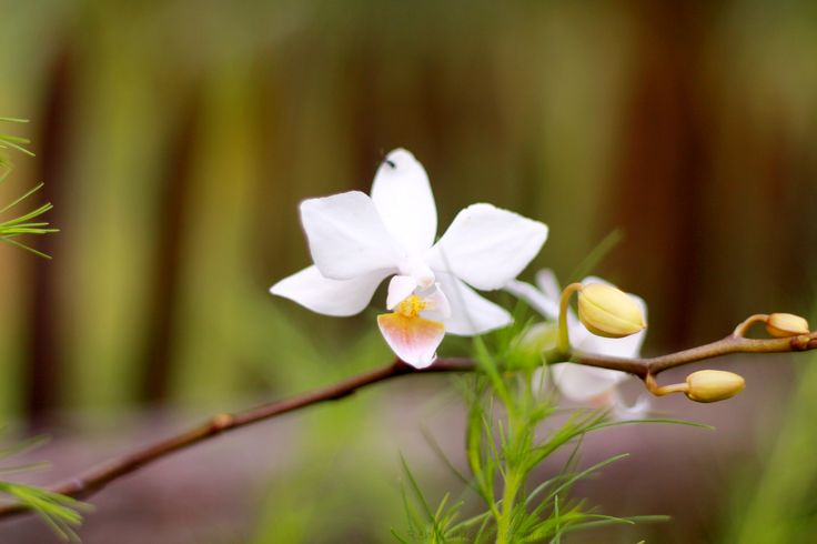 """""""the orchids..."""""""