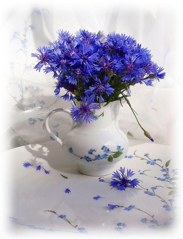 картинки с добрым утром ромашки с васильками