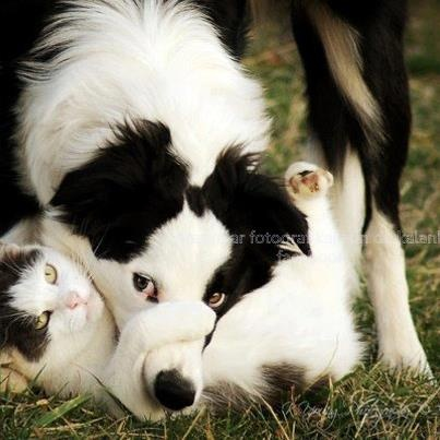 Look-a-like.....awesome!   MANZARALAR, FOTOĞRAF KARESİN de KALANLAR's photo.: 3 Dogs, Dogs And Cats, Truth, Cats And Dogs, Chat, Animal Photos, Furry Friends