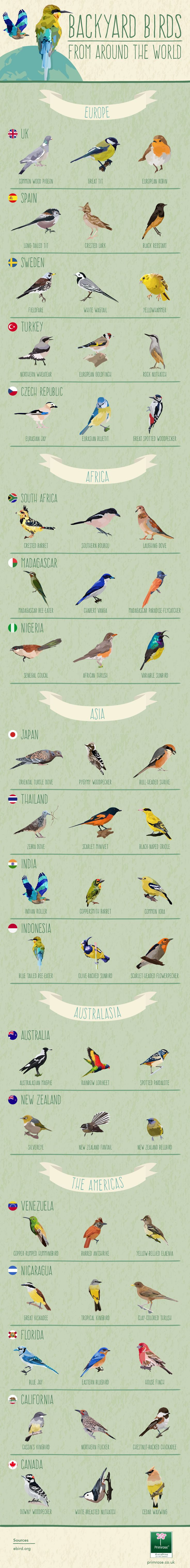 best 25 backyard birds ideas on pinterest pretty birds blue