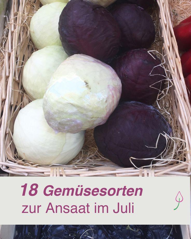 Gartenideen für den Gemüsegarten im Juli: Jetzt diese Gemüsesorten pflanzen und im Herbst ernten