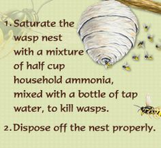 Wasp Nest Removal - Home Remedies for Removing Wasp Nests