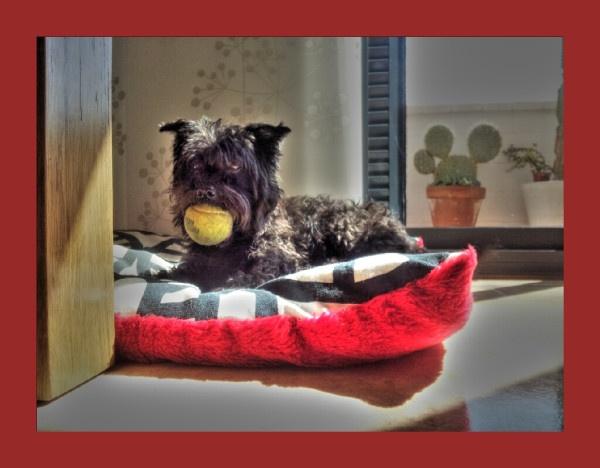Dr Watson & his ball
