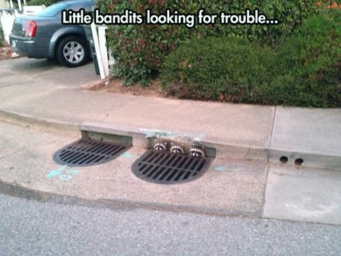 Little bandits looking for...